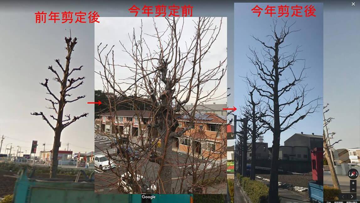 技術力の例(樹形の復旧)
